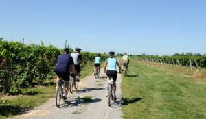 five people biking through a vineyard