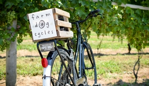 bicycle leaning up against grape vine