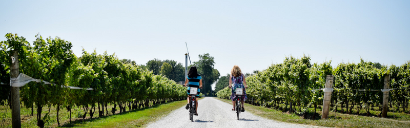 Two women biking through a vineyard