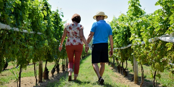 Couple walking through the vineyard