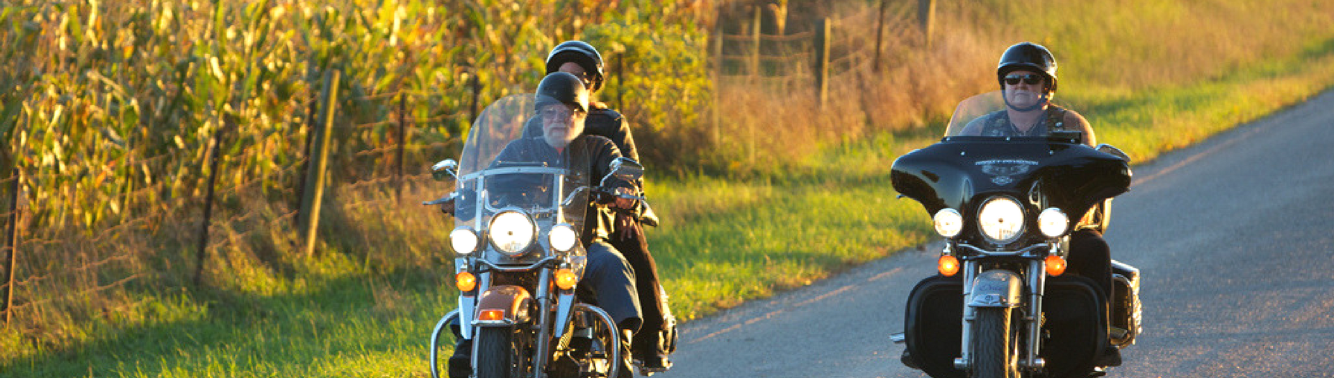Two motorcycles driving along vineyard