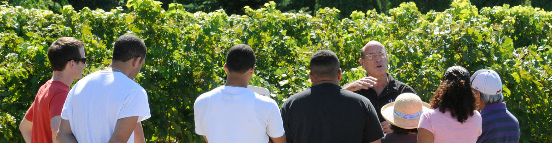 People in vineyard